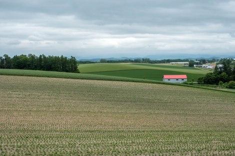 Farmland near Biei