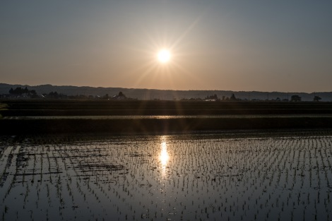 Sunset over the rice fields, Aizu Wakamatsu