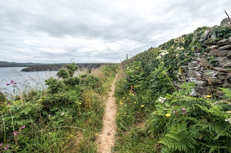 Wildflowers and stone wall on the Pembrokeshire Coast Path
