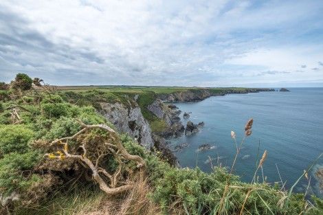 Sea views on the Pembrokeshire Coast Path