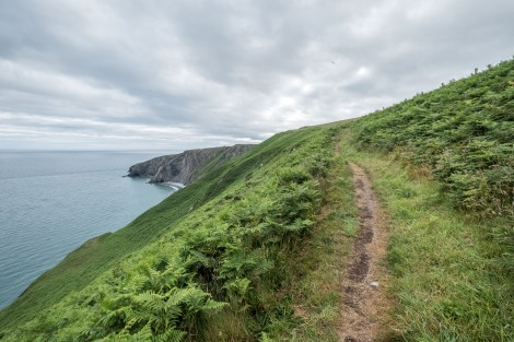 Great trails on the Pembrokeshire Coast Path