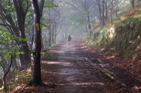Following the low-level variant after Santuario de Gaudelupe through forest