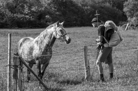 A pilgrim and a horse on the Camino del Norte