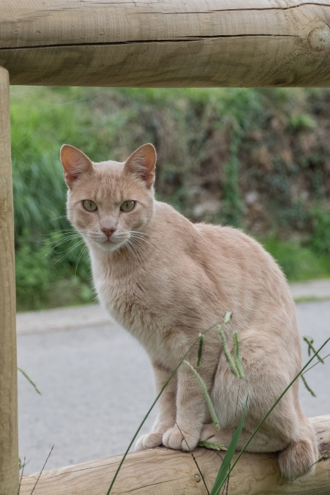 A curious cat on the Camino del Norte