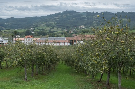 An apple orchard on the outskirts of Villaviciosa