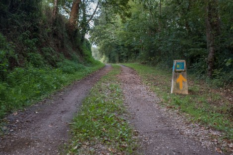 Following the arrows through the forest on the Camino del Norte