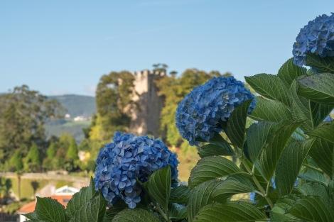 Hydrangeas and San Martin's Castle (El Castillo de San Martín) in the background