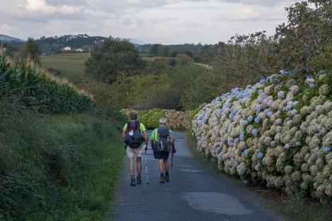 Pilgrims and hydrangeas on the Camino del Norte
