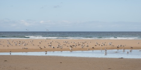 Seagulls at Playa de Penarronda