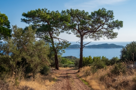 Tree symmetry on the Lycian Way