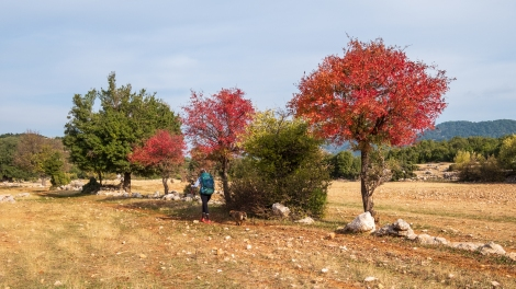 Sarah and our tag-along dog (we called her Bob) passing more autumn colours