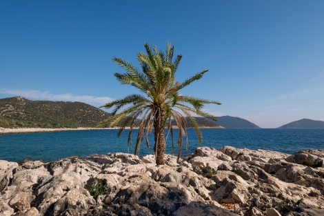 A palm tree on the Lycian Way