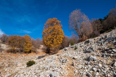 Pops of autumn colour dot the landscape