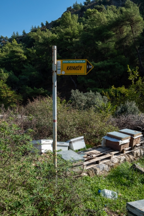 Hooray, we found a sign, and bees