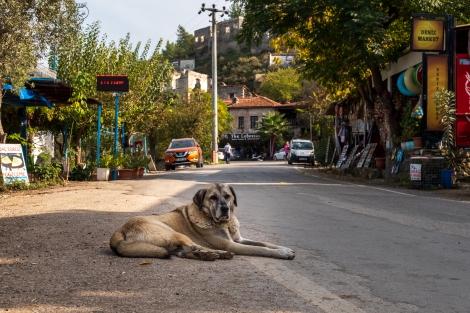 A dog in Kayaköy