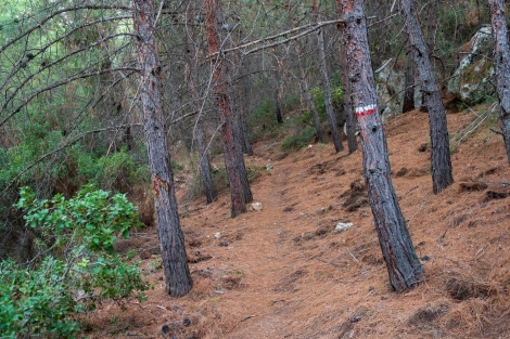Following the red and white blazes on an easy forest path