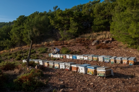 Bee hives and the beekeeper
