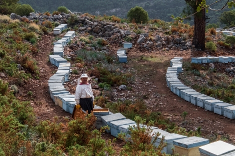 Beehives and their keeper on the Lycian Way